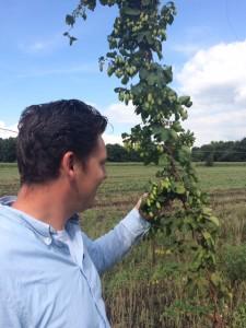 hop veld - Bierbrouwerij Oijen
